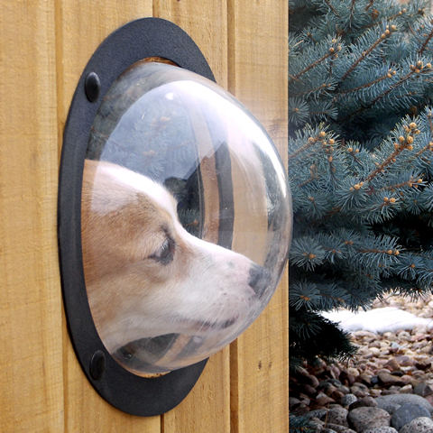 To help curb a dog's curiosity, give him a peek with a PetPeek window.