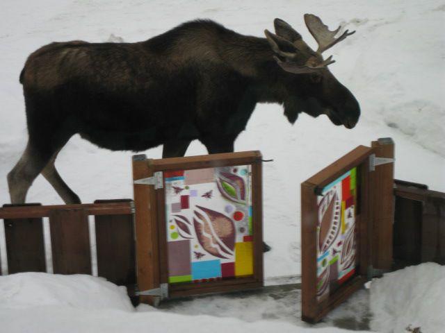 ALASKA HOME | ARTIST PROFILE | TAM JOHANNES