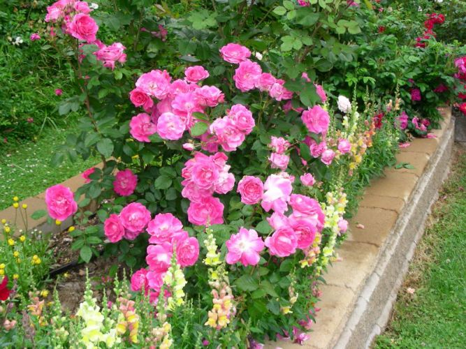 Alaska Home Articles Outdoor Living Blooms Among The